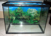 Freshwater Aquarium Fish Resource
